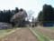 北側から見る草岡大明神桜