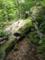 切り欠き付きの倒木の図
