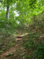 仙交小屋から水場に至るあたりのブナ林の図
