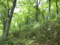 仙台カゴ付近のブナ林