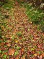 落ち葉に覆われた登山道