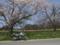 長根峠入り口の桜
