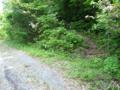 林道を経てまた登る