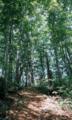 翁山のブナ林