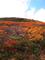 オモワシ山付近の紅葉