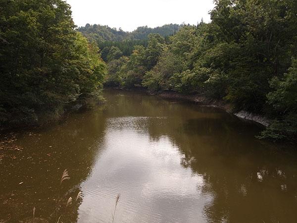 堤の水も濁りがち