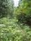 廃道と化した林道の図