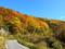 葉山登山口付近の紅葉