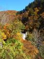 熊野川上流の紅葉