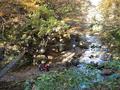 紅葉川渓谷に下りてくところ