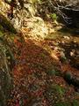 紅葉の絨毯です