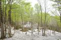 小倉山林道分岐地点・残雪と新緑のブナ林と