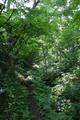 序盤の直登は林の中