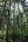 どのへんが大森林なのかいぶかしむクセ穴大森林