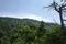 中尾根コースから見上げる摩耶山山頂の図