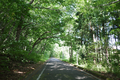 久々に見る二口峠のブナ林の図