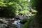 夏の紅葉川渓谷