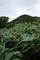 石橋峠の笹藪地帯