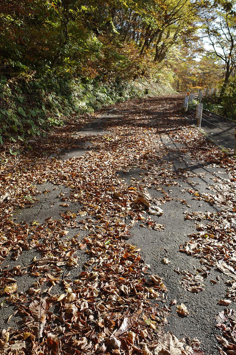 落ち葉散らばる国道286号線