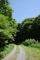 ブナの森遊歩道手前の作業道