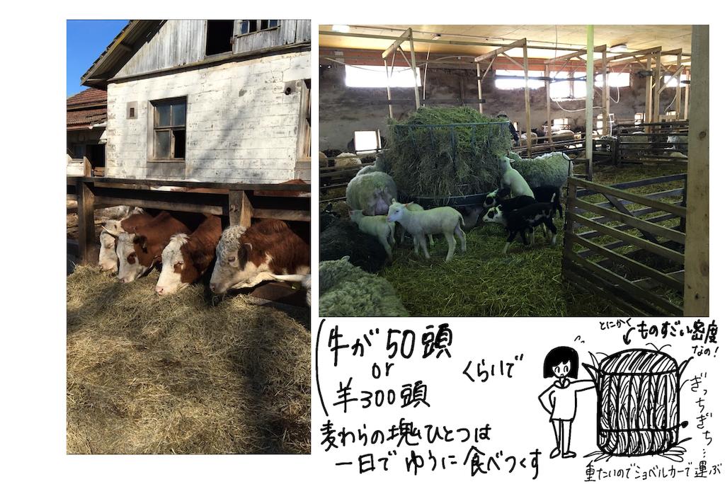 f:id:fuki-bee-stripes:20191216223338p:image