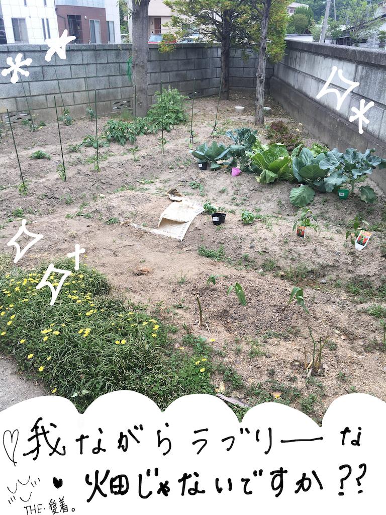 f:id:fuki-bee-stripes:20200521220525p:image