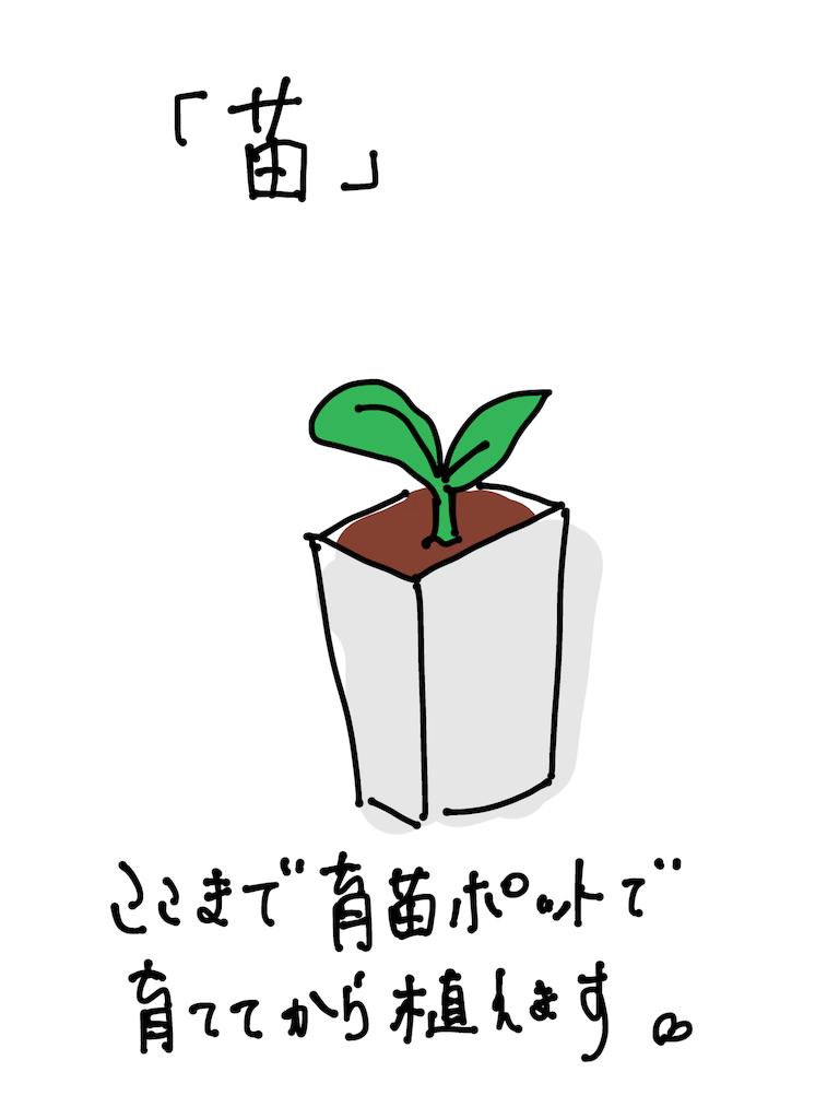 f:id:fuki-bee-stripes:20200521223347p:image