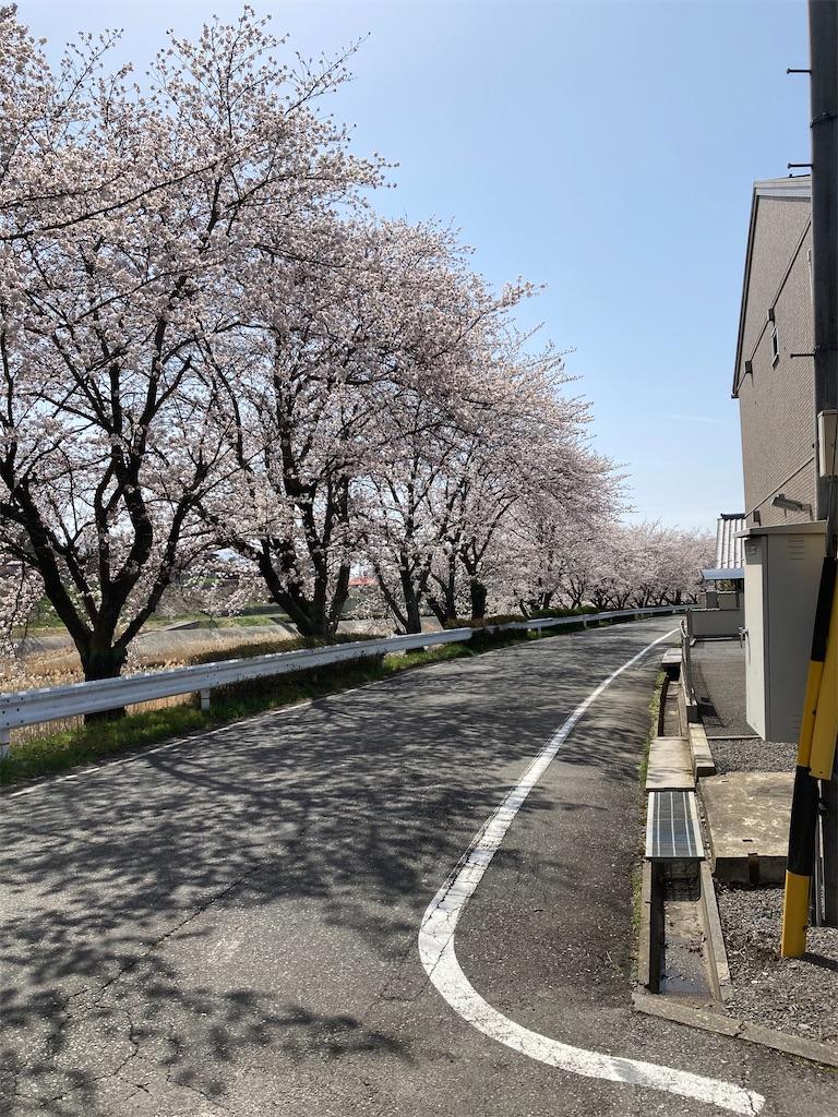 f:id:fuki-bee-stripes:20210412214412j:image