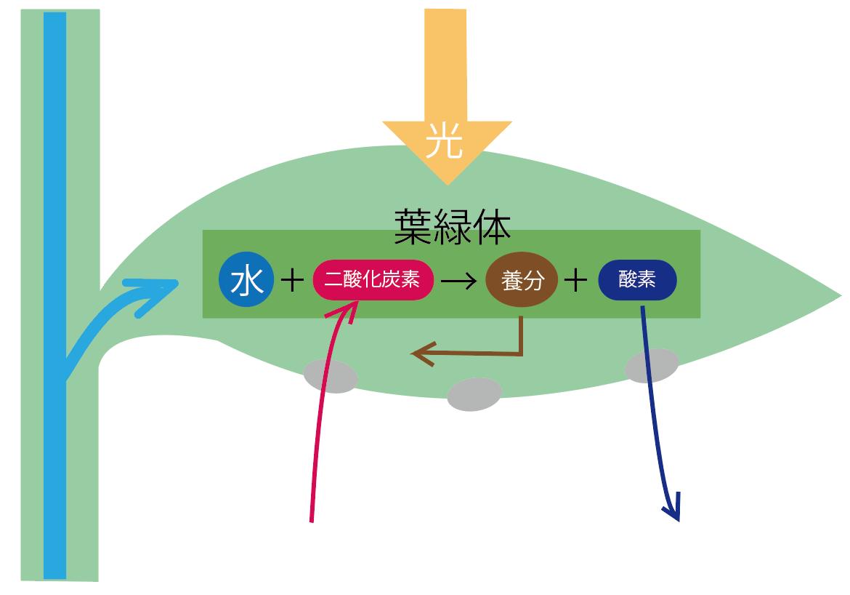 f:id:fukikeisuke:20200413165054p:plain