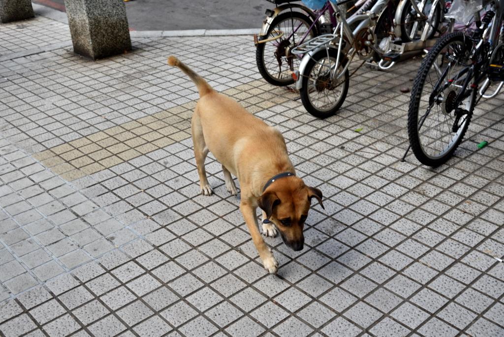 f:id:fuku-taro:20170928205146j:plain