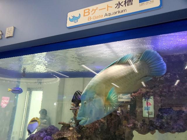 f:id:fuku-taro:20190804091332j:image