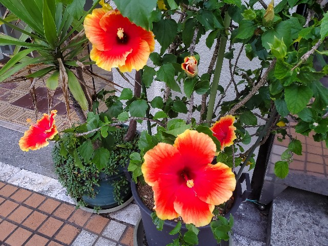 f:id:fuku-taro:20190811222147j:image