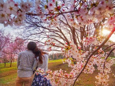 花見のカップル