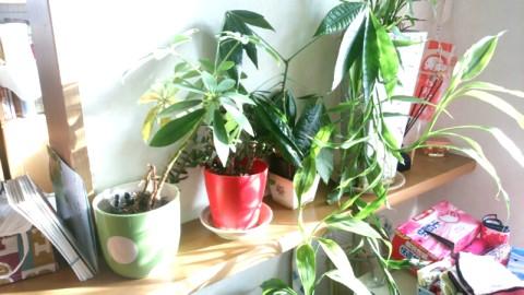 リビングインテリアの植木鉢