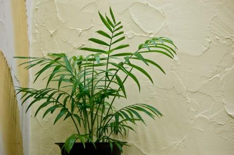 リビングの植木鉢
