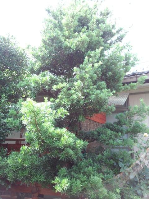 f:id:fukubuggy:20160716162454j:plain