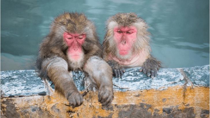 猿 温泉 入浴 リラックス
