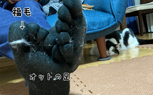 f:id:fukufukudo:20210225163736j:plain