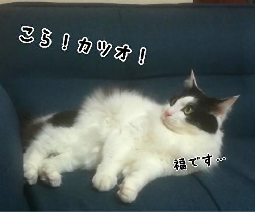 f:id:fukufukudo:20210225163752j:plain