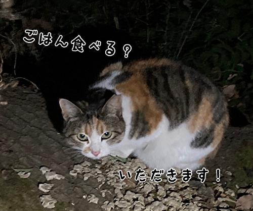 f:id:fukufukudo:20210303155511j:plain