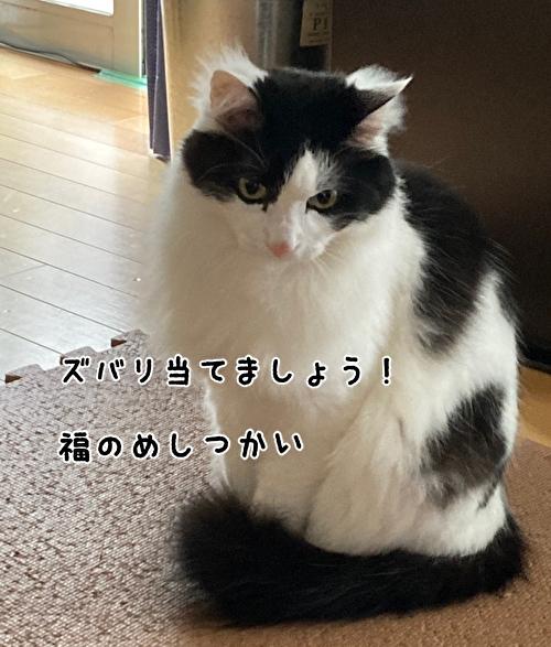 f:id:fukufukudo:20210401133118j:plain