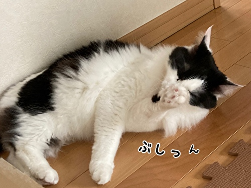 f:id:fukufukudo:20210403210013j:plain