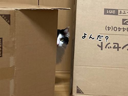 f:id:fukufukudo:20210403210047j:plain