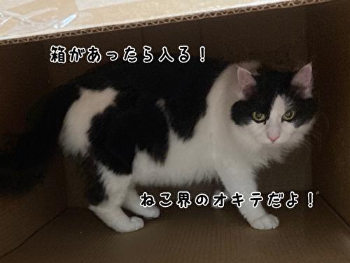 f:id:fukufukudo:20210403210111j:plain