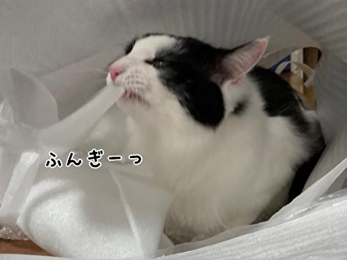 f:id:fukufukudo:20210403210130j:plain