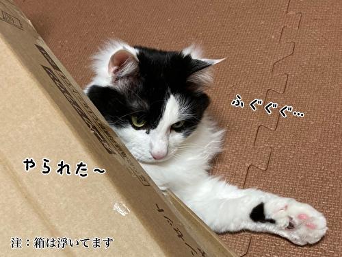 f:id:fukufukudo:20210403210142j:plain