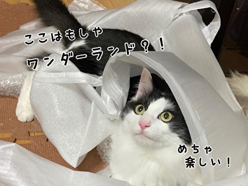 f:id:fukufukudo:20210403210154j:plain