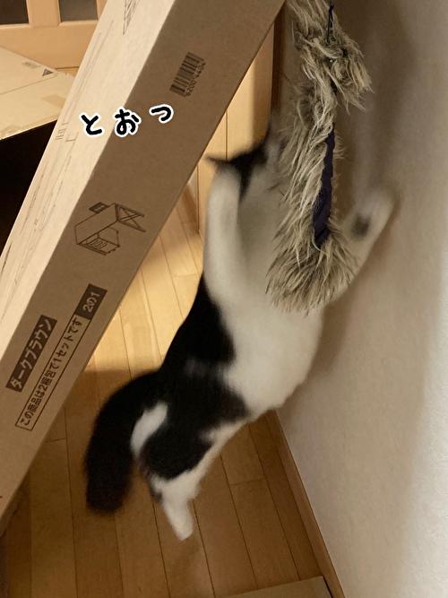 f:id:fukufukudo:20210406152825j:plain