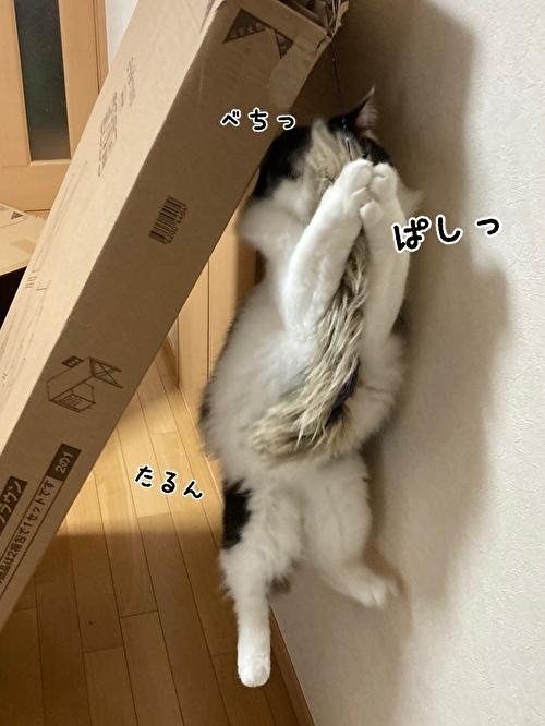 f:id:fukufukudo:20210406153001j:plain