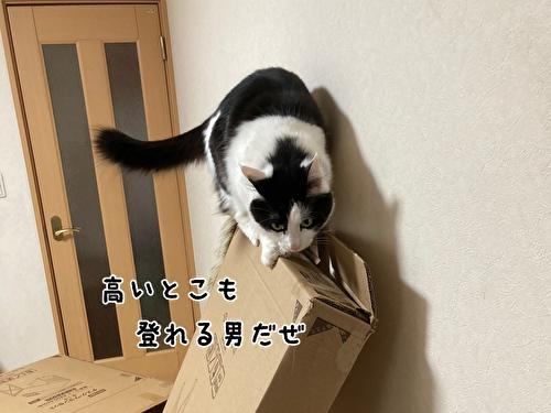 f:id:fukufukudo:20210406153037j:plain